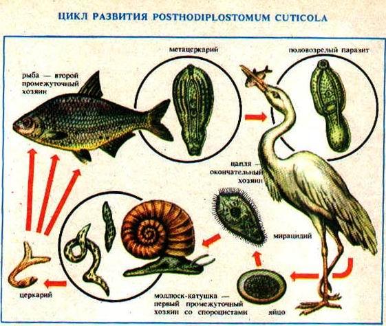 технопланктон привада